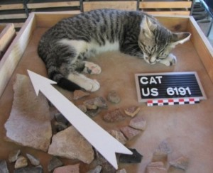 Creuzieux - US cat