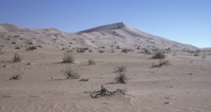 Fig. 1 : La dune de Guern ech Cheikh (Grand Erg occidental).