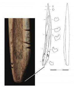 Fig. 9. Poinçon sur esquille de radius de petit ruminant (mouton ou chèvre) avec aménagements proximaux réalisés par sciage transversal (niveau 4). Échelle : 3 cm.
