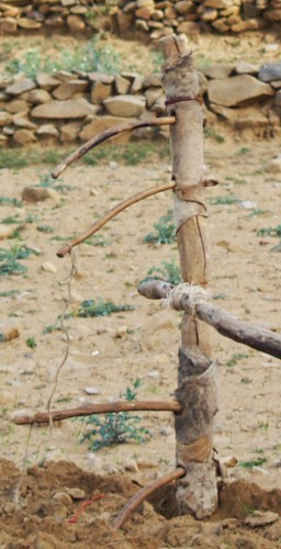 Fig. 7 : Joug d'une maresha, araire identique à celle de la figure 6. © N. Blond, 201