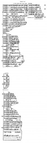 Fig. 2 : Copie des signes d'une partie de la tablette 49 du š. ālu, relative aux présages tirés du comportement des cochons - CT 38 46 (© CDLI)