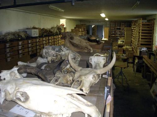 Fig. 1 : La collection avant rangement (F.Barbot)