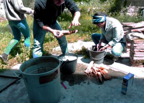 Fig. 4 : La cuisine des archéozoologues (E. Vila)