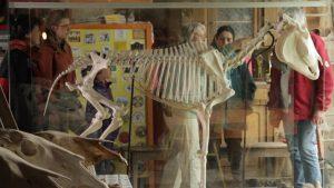 La collection ostéologique (© ALTOMEDIA Productions, G. Frydman & P.-A. Paul)