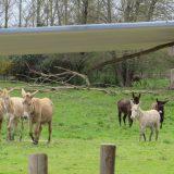 VILA_Les ânes dans le pré_720px
