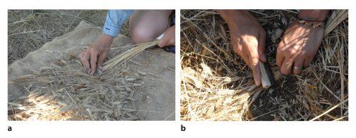 Fig. 7 : Traitement de la récolte (battage) : séparation des épis et des tiges par érussage (a) et par coupe, sous les épis, des tiges posées directement sur le sol (b). Clichés : N. Cayol.