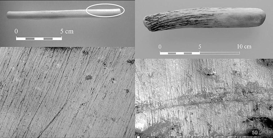 Figure 4 : Exemplaires expérimentaux (métapode de mouton à gauche, bois de cerf à droite) ayant travaillé du lin (fil simple).